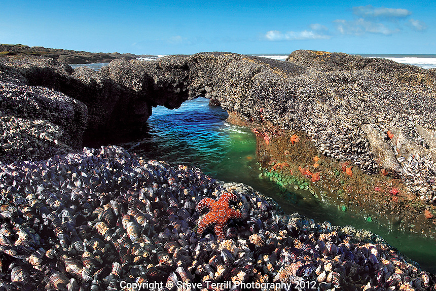 Basalt arch encrusted with mussels and barnacles in Lincoln County, Oregon