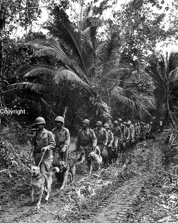 """U.S. Marine """"Raiders"""" and their dogs, which are used for scouting and running messages, starting off for the jungle front lines on Bougainville.  Ca.  November/December 1943.  T.Sgt. J. Sarno.  (Marine Corps)<br /> Exact Date Shot Unknown<br /> NARA FILE #:  127-GR-84-68407<br /> WAR & CONFLICT BOOK #:  870"""