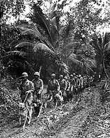 "U.S. Marine ""Raiders"" and their dogs, which are used for scouting and running messages, starting off for the jungle front lines on Bougainville.  Ca.  November/December 1943.  T.Sgt. J. Sarno.  (Marine Corps)<br /> Exact Date Shot Unknown<br /> NARA FILE #:  127-GR-84-68407<br /> WAR & CONFLICT BOOK #:  870"