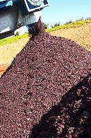 Grape skins and pips after pressing red grapes, Herdade Sao Miguel, Alentejo, Portugal herdade de sao miguel alentejo portugal