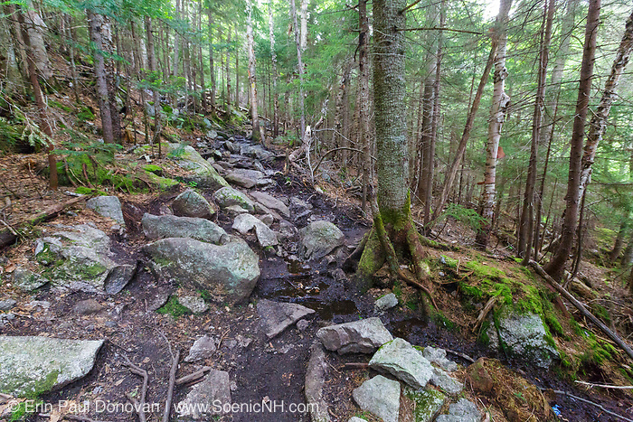 A section of the Mt Tecumseh Trail, just below the first viewpoint, in the New Hampshire White Mountains in the spring of 2019 that is in desperate need of drainage work.