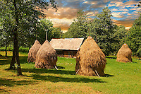 Traditional hay ricks in a wooded field near Breb, Nr Sighlet, Maramures, Transylvania