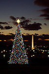 The Capitol Christmas Tree adds holiday cheer to DC every December.