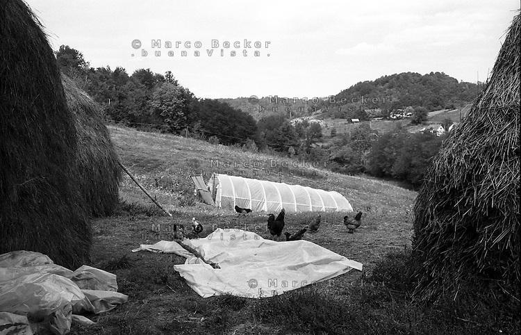 Guca (Cacak). Gallo e galline tra covoni di fieno e una serra in una fattoria --- Guca (Cacak). Rooster and chickens amidst hay sheaves and a greenhouse in a farm