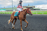 Ethical Funds(9) with Jockey Emile Ramsammy aboard after completing the Summer Stakes at Woodbine Race Course in Toronto, Canada on September 13, 2014 with Jockey Patrick Husbands aboard.