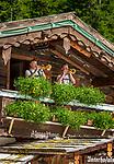 Oesterreich, Salzburger Land, Pongau, Filzmoos: Unterhofalm, bewirtschaftete Almhuette, Musikanten spielen zur Unterhaltung auf | Austria, Salzburger Land, Pongau, Filzmoos: mountain inn Unterhofalm
