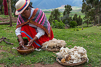 Peru, Urubamba Valley, Quechua Village of Misminay.  Woman Scraping a Root to Create a Natural Organic Detergent for Washing Wool.