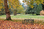 An empty park bench gives way to the seasonal changes in Stanley Park, Vancouver, BC, Canada.  In urban Stanley Park, the promenade takes walkers, bikers, and bladers past the downtown skyline and lush natural gardens.