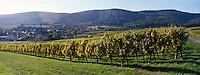 Europe/France/Alsace/67/Bas-Rhin/Cleebourg : Vignoble et village