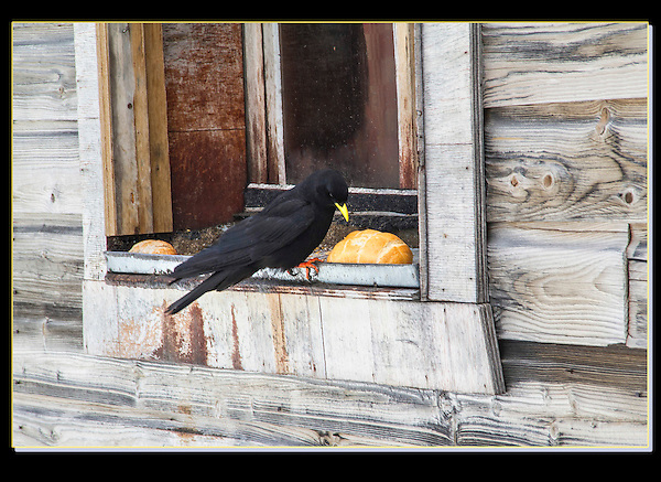 The raven agrees, the French make a might tasty bread. <br />