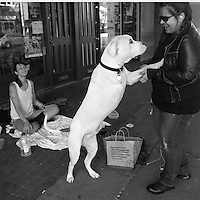 """Angel Balai (right) gives $5 to Caitlin Hamilton, age 24, and her dog Hanai, a three-legged Boxer, in Seattle, Wash.  Balai says """"I know what its like to be homeless.  I give like 5 bucks or 20, whatever I have with me. Its always nice to help out.""""  She also gave them her leftover food which Hamilton gave entirely to Hanai."""