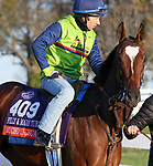Mucho Unusual, trained by trainer Tim Yakteen, exercises in preparation for the Breeders' Cup Filly & Mare Turf at Keeneland Racetrack in Lexington, Kentucky on November 3, 2020.