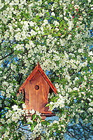 Fancy cedar bird house front view surrounded by blooming branches of a crabapple tree in spring