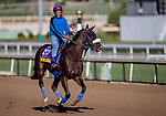 October 30, 2019: Breeders' Cup Distaff entrant Paradise Woods, trained by John A. Shirreffs, exercises in preparation for the Breeders' Cup World Championships at Santa Anita Park in Arcadia, California on October 30, 2019. Carolyn Simancik/Eclipse Sportswire/Breeders' Cup/CSM