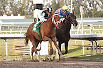 Capo Bastone (5) outfinishes Offlee Fast and wins allowance race at Gulfstream Park. Hallandale Beach Florida. 02-16-2013