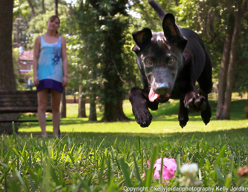 Kelly.Jordan@jacksonville.com--052311--Amanda Foley, of Jacksonville watches as her puppy leaps for her pink tennis ball as she plays with her fourth month-old puppy Ellie at Willowbranch Park in Riverside Monday afternoon, May 23, 2011. Foley was trying to get Ellie tired before she has to be at work at 4pm. She adopted the puppy from the Jacksonville Humane Society two months ago.(The Florida Times-Union, Kelly Jordan)