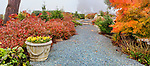 Garden Path in Fall Color.  Private Garden with release.  Professional landscape.