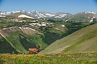 Rocky Mountain Natl Park, Colorado, USA,