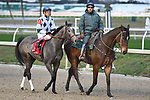 Various images from horse races held at the Fairgrounds Race Course in New Orleans, LA on January 19, 2019.