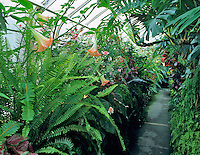Inside of greenhouse at Volunteer Park Conservatory, Seattle, Washignton