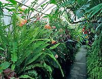 Inside of greenhouse at Volunteer Park Conservatory, Seattle, Washignton