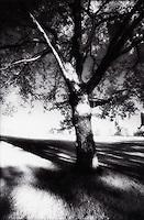 Single tree<br />