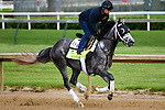 LOUISVILLE, KY - MAY 04: Destin, trained by Todd Pletcher and owned by Twin Creeks Racing Stables, LLC, exercises and prepares during morning workouts for the Kentucky Derby and Kentucky Oaks at Churchill Downs on May 4, 2016 in Louisville, Kentucky.(Photo by Samantha Bussanch/Eclipse Sportswire/Getty Images)