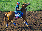 October 27, 2014:  Rainha Da Bateria, trained by Graham Motion, exercises in preparation for the Breeders' Cup Juvenile Fillies Turf at Santa Anita Race Course in Arcadia, California on October 27, 2014.John Voorhees/ESW/CSM