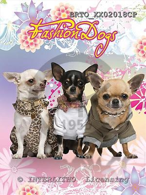 Alfredo, ANIMALS, dogs, photos+++++,BRTOXX02018CP,#a# Hunde, perros