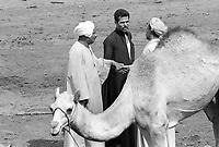 - Egitto, Il Cairo, mercato del bestiame ottobre 1986<br /> <br /> - Egypt, Cairo, cattle market, October 1986