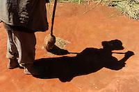 MADAGASCAR rice cultivation , farmer collects rice after trashing / MADAGASKAR Dorf Morarano , Reis Anbau, Bauer fegt Reiskoerner nach Trennung von der Spreu zusammen