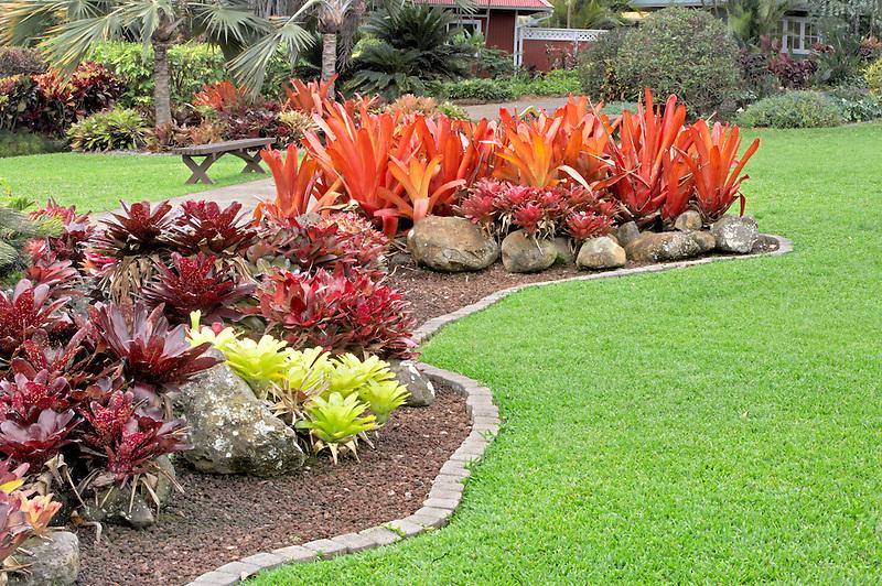 A variety of Bromeliads. Maui Tropical Plantation. Maui. Hawaii