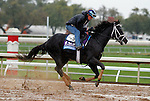 October 28, 2015: Isotherm, trained by George Weaver, and owned by Matthew Schera, is cross entered in the Breeder's Cup Sentient Jet Juvenile $2,000,000, and has first preference in the Breeder's Cup Juvenile Turf $1,000,000.  Candice Chavez/ESW/CSM