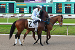 January 16, 2016: Majestic Harbor with Corey J. Lanerie up in the Louisiana Stakes race at the Fairgrounds race course in New Orleans Louisiana. Steve Dalmado/ESW/CSM