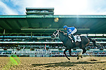 September 26, 2015 :  Wedding Toast, ridden by Jose Lezcano, wins the Grade I Beldame Stakes on Turf Classic Day at Belmont Park in Elmont, NY. Scott Serio/ESW/CSM