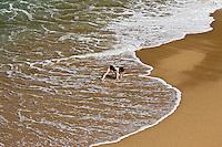 Europe/France/Aquitaine/64/Pyrénées-Atlantiques/Pays Basque/ Biarritz: Baigneuse à la plage du Port Vieux