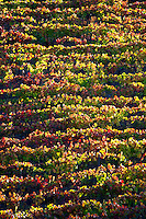 autumn colours vineyards quinta da gaivosa douro portugal