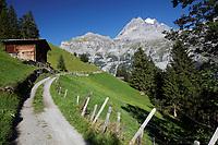 Path through pastures near Swiss village of Gimmewald, Jungfrau in background, Switzerland