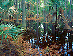 Skidaway Island State Park, GA<br /> Reflections on still surface of a salt water swamp along the Big Ferry Trail