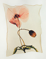 Pressed Field Poppy ( Papaver rhoeas )- Polaroid lift.