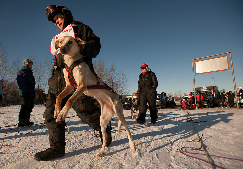 A musher readies his team during the Alaskan Sled Dog & Racing Association Exxon Mobile Open in Anchorage, Alaska.