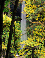 North Falls with fall colored Big Leaf Maple trees. Silver Falls State Park. Oregon.