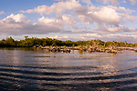 American Crocodiles, Cuba Underwater, Jardines de la Reina, Mangrove, Protected Marine park underwater