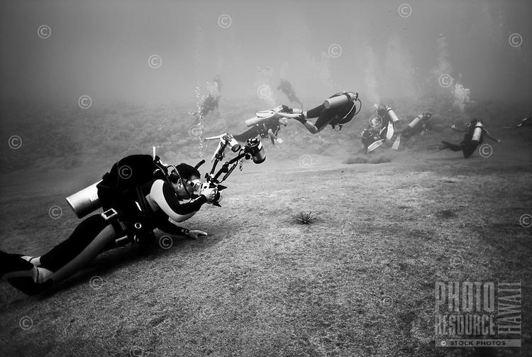 Diver photographing Sea Urchin, Kona, Hawaii