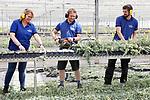 Foto: VidiPhoto<br /> <br /> RESSEN – Handelskwekerij Escaro in Ressen in de Betuwe. Escaro is de grootste sedumkweker van ons land en wordt gerund door Esther Meeuwsen en haar broers Roland en Willem-Jan.