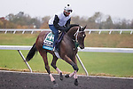 October 28, 2015:  Manhattan Dan, trained by Gary Contessa and owned by Platinum Seven LLC & Dan Guarino, exercises in preparation for the Breeders' Cup Juvenile Turf at Keeneland Race Track in Lexington, Kentucky on October 28, 2015. Jon Durr/ESW/CSM