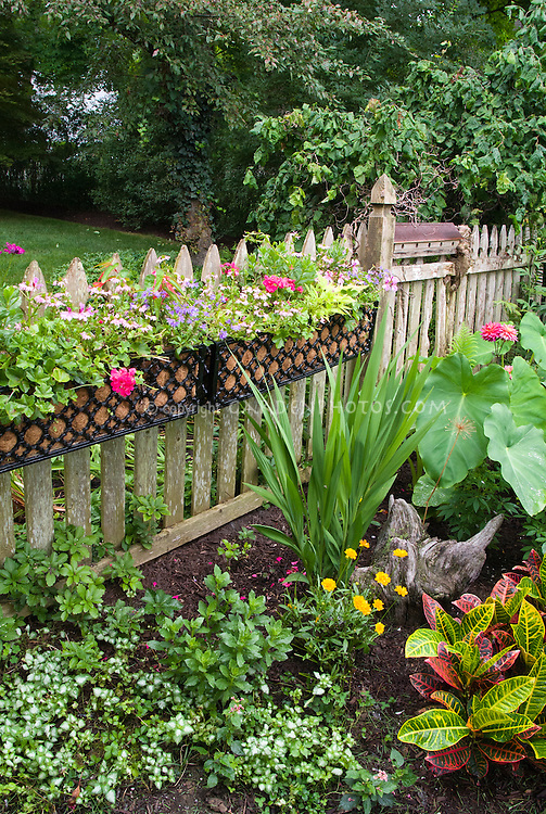 Using windowboxes lined with coconut coir on picket fence for container garden, with tropicals elephant ears Colocasian and other plants in ground