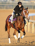 4 November 2010:  Typhoon Slew, trained by Michael J. Maker and to be ridden by jockey Julien Leparoux, during work outs for the 2010 Breeders Cup at Churchill Downs in Louisville, Kentucky.(Scott Serio/Eclipse Sportswire)
