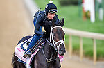 LOUISVILLE, KY - MAY 02: Mo d'Amour, trained by Todd Pletcher, exercises and prepares during morning workouts for the Kentucky Derby and Kentucky Oaks at Churchill Downs on May 2, 2016 in Louisville, Kentucky. (photo by John Voorhees/Eclipse Sportswire/Getty Images)