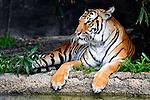 Houston Zoo 2013